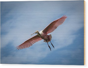 Roseate Spoonbill In Flight Wood Print by Gregory Daley  PPSA