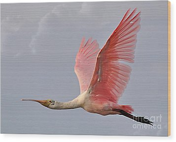 Wood Print featuring the photograph Roseate Spoonbill In Flight by Kathy Baccari