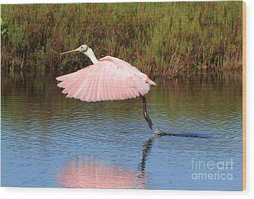 Roseate Spoonbill  Wood Print by Jennifer Zelik