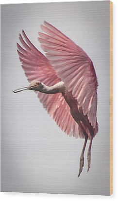 Roseate Spoonbill Landing Wood Print by Gregory Daley  PPSA