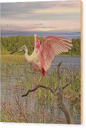 Roseate Spoonbill At Lake St. George Wood Print by Schwartz