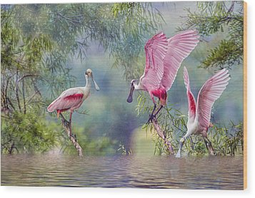 Roseate Spoonbill Trio Wood Print by Bonnie Barry