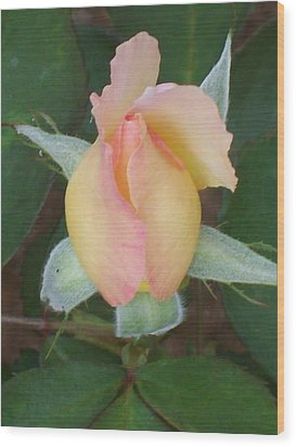 Wood Print featuring the photograph Rosebud by Belinda Lee
