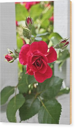 Wood Print featuring the photograph Roses Are Red by Joann Copeland-Paul