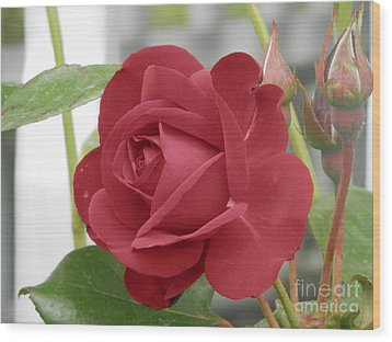 Roses Are Red Wood Print by Margaret McDermott