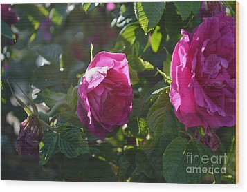 Roses At Sunrise Wood Print by Alys Caviness-Gober