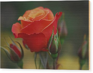 Roses Wood Print by Jean-Jacques Thebault
