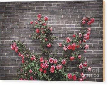 Roses On Brick Wall Wood Print by Elena Elisseeva