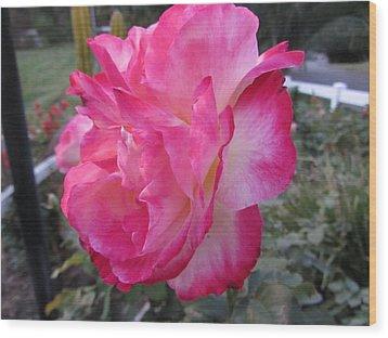 Rosey Rose Wood Print