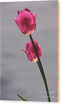 Rosy Loveliness For A Gray Day Wood Print by Byron Varvarigos