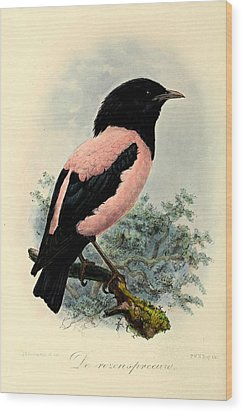 Rosy Starling Wood Print by Rob Dreyer