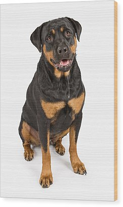 Rottweiler Dog With Drool Wood Print by Susan Schmitz