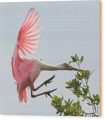 Rough Landing Wood Print by Carol Groenen