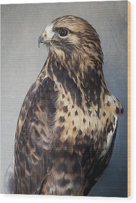 Rough-legged Hawk Wood Print by Paulette Thomas