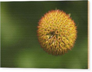 Round Flower Wood Print by Karol Livote