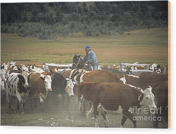 Cattle Round Up Patagonia Wood Print by James Brunker
