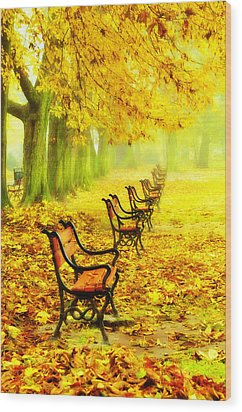 Row Of Red Benches In The Park Wood Print by Jaroslaw Grudzinski
