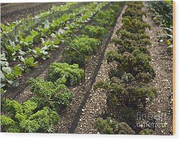 Rows Of Kale Wood Print by Anne Gilbert