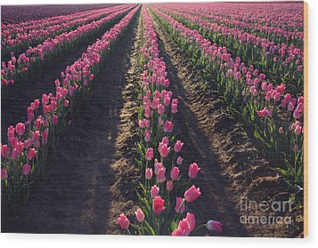 Wood Print featuring the photograph Rows Of Pink by Sylvia Cook