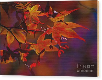 Royal Autumn A Wood Print by Jennifer Apffel