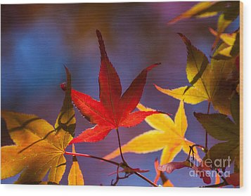 Royal Autumn B Wood Print by Jennifer Apffel