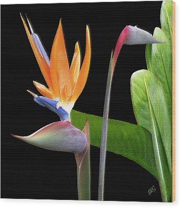 Royal Beauty II - Bird Of Paradise Wood Print