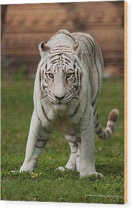 Royal Bengal Tiger Wood Print