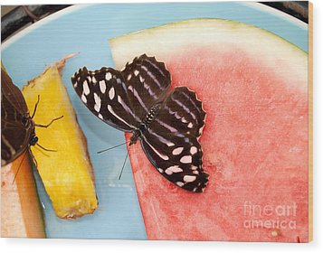 Wood Print featuring the photograph Royal Blue Butterfly by Eva Kaufman