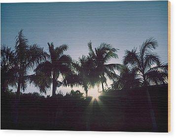 Royal Palm Sunset Wood Print