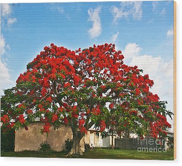 Royal Panciana Tree Wood Print