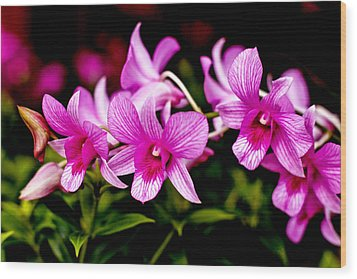 Royal Pink Orchid Wood Print by Donald Chen