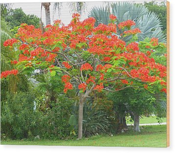 Wood Print featuring the photograph Royal Poinciana by Kay Gilley