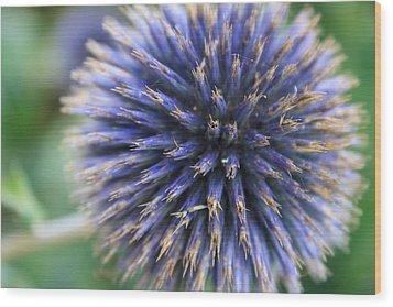 Royal Purple Scottish Thistle Wood Print by Peta Thames