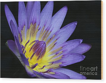 Royal Purple Water Lily #14 Wood Print