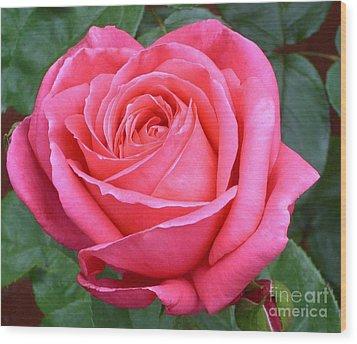 Royale Magenta Rose Wood Print by Paul Clinkunbroomer