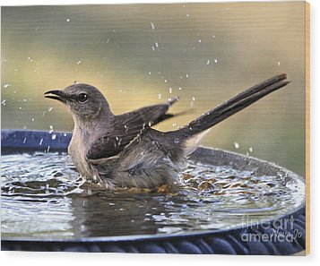 Wood Print featuring the photograph Rub-a-dub-dub Mockingbird by Nava Thompson