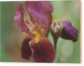 Ruby Iris Wood Print