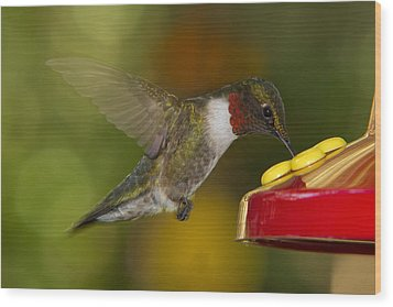 Wood Print featuring the photograph Ruby-throat Hummer Sipping by Robert L Jackson