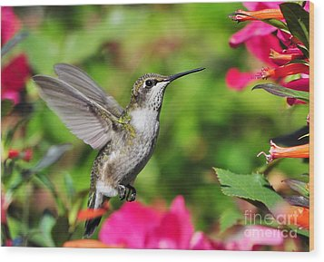 Wood Print featuring the photograph Ruby Throated Humingbird by Kathy Baccari