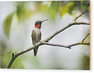 Ruby Throated Hummingbird Wood Print by Christina Rollo