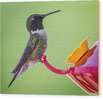 Ruby-throated Hummingbird Wood Print by Brian Stevens