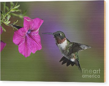 Ruby-throated Hummingbird - D004190 Wood Print