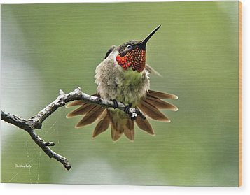 Ruby-throated Velocity Wood Print by Christina Rollo
