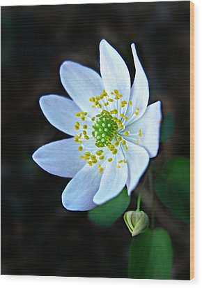 Wood Print featuring the photograph Rue Anemone by William Tanneberger