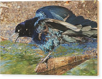 Ruffle My Feathers Wood Print by Lorri Crossno