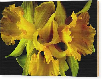 Wood Print featuring the photograph Ruffled Daffodils by Marianne Dow