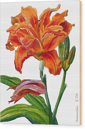 Ruffled Orange Daylily - Hemerocallis Wood Print