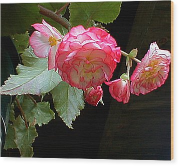 Ruffled Pink Begonia's Wood Print