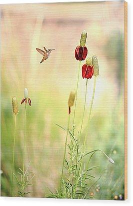 Rufous Hummingbird Mexican Hat Corn Flower Wood Print