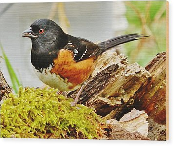 Wood Print featuring the photograph Spotted Towhee by VLee Watson
